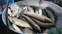 V sobotu proběhl výlov rybníka Voborský. Poskytl nám nádhernou více druhovou rybí obsádku. Násadapřišla nasadit ze 3/4 do revíru Hamerský potok 1A (Vajgar) a zbytek na Nežárku. Petrův zdar Kamil […]